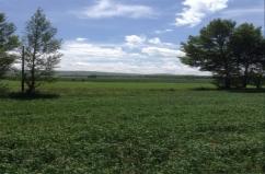 VWIN真人市节水灌溉300亩小麦喷灌